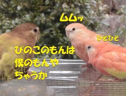 CIMG7804.jpg