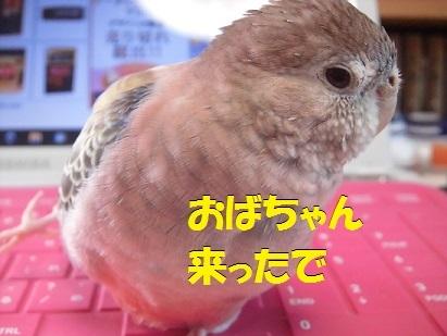 CIMG7836.jpg