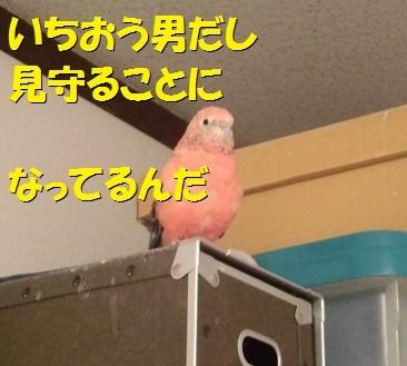 CIMG8009.jpg