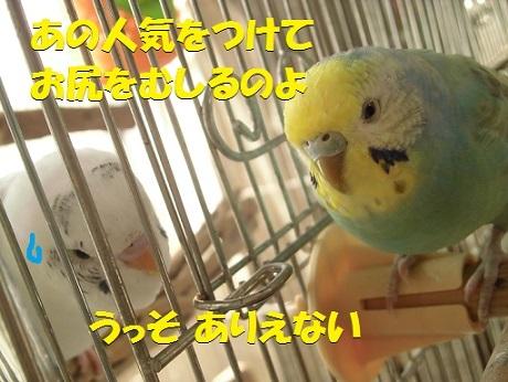 CIMG8185.jpg