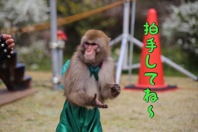 ハイブリッド猿回し 6