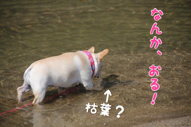 オルカと水遊び 7