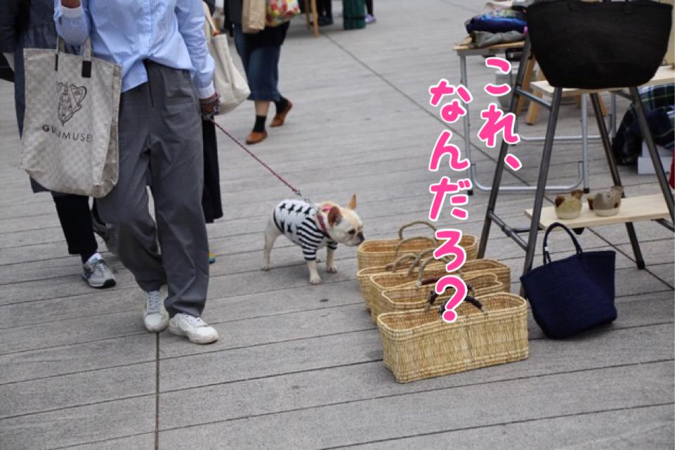 太田川 フレブル 5