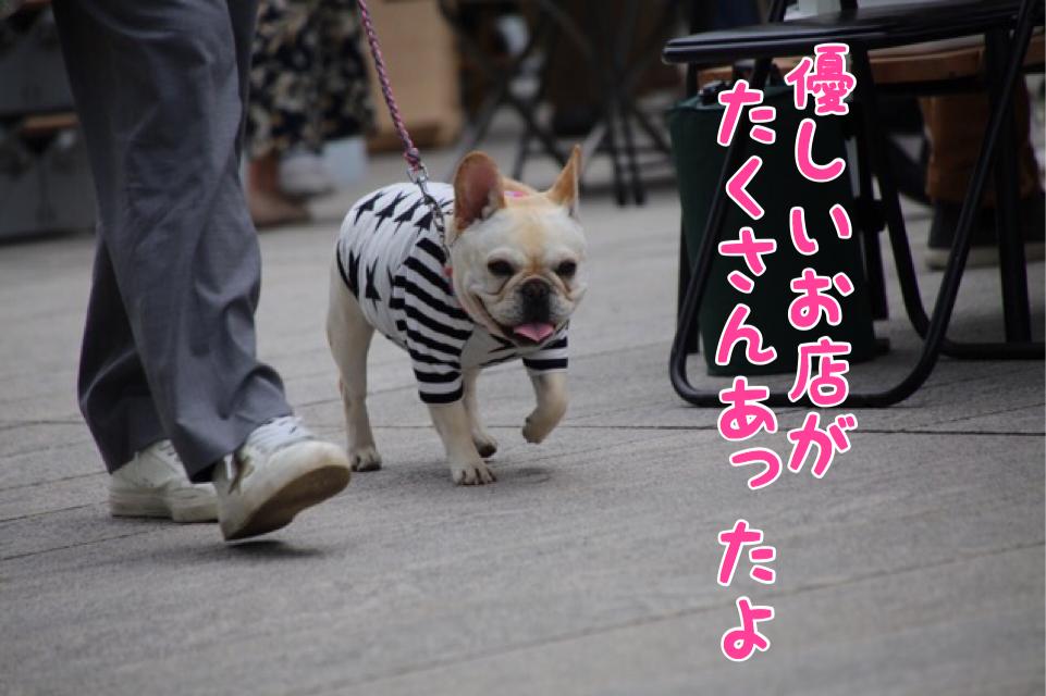 太田川 フレブル 6