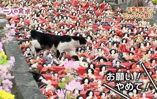 千葉・勝浦のビッグひな祭り
