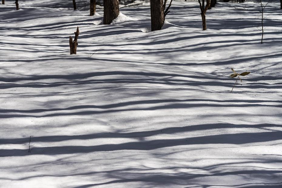 2017.02.24上高地_樹木の影8