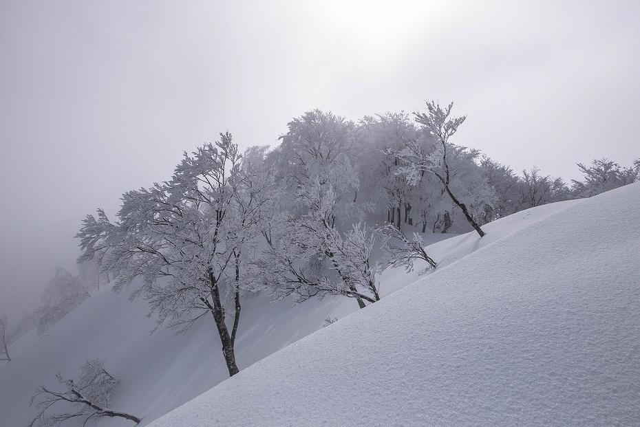 2017.02.27銀杏峰12