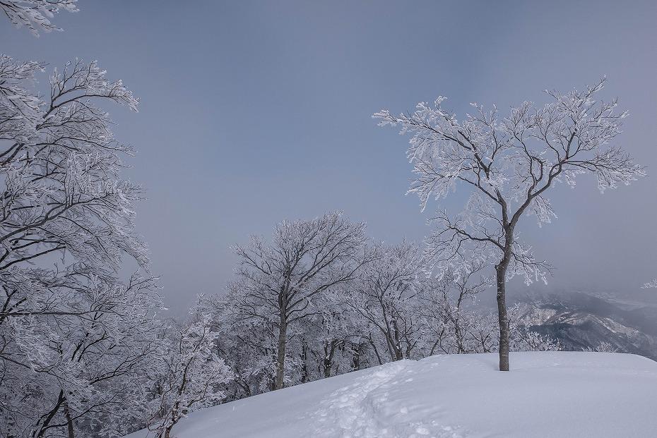 2017.02.27銀杏峰13