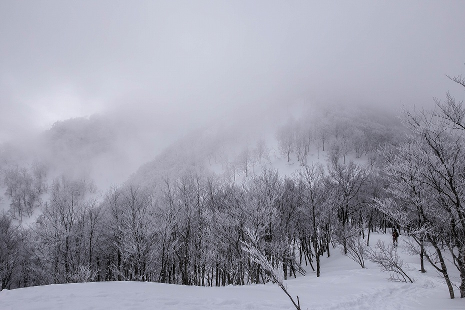 2017.02.27銀杏峰8