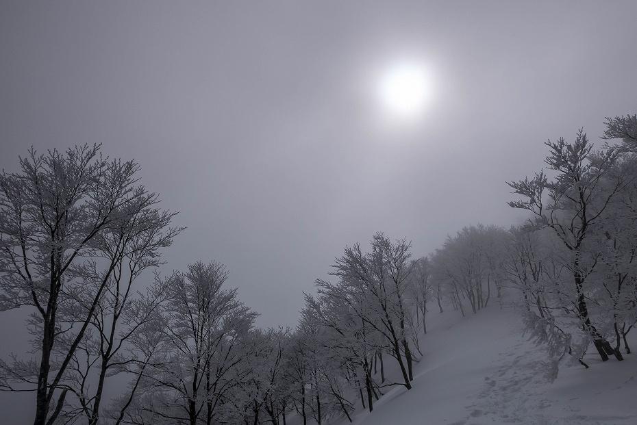 2017.02.27銀杏峰10