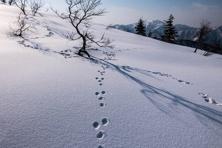 2017.03.04大長山_取立山から鉢伏山展望2