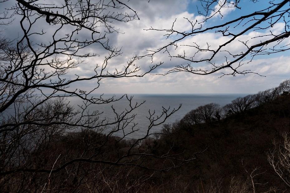 2017.03.11能登猿山岬の雪割草23