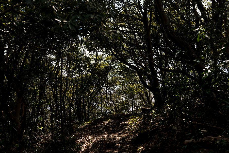 2017.03.11能登猿山岬の雪割草18