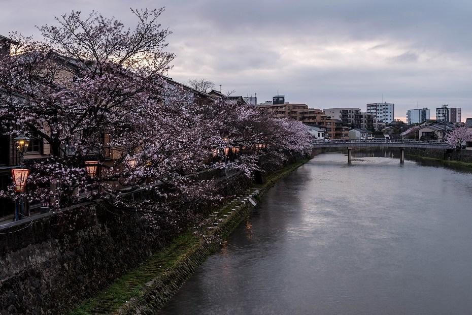 2017.04.07主計町の桜並木10