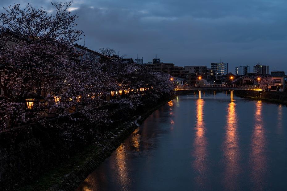 2017.04.07主計町の桜並木11
