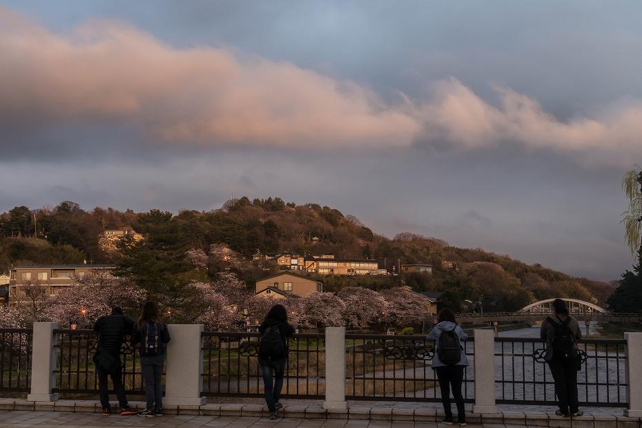 2017.04.07主計町の桜並木9
