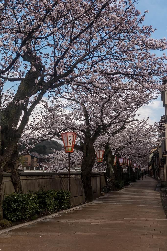 2017.04.07主計町の桜並木6