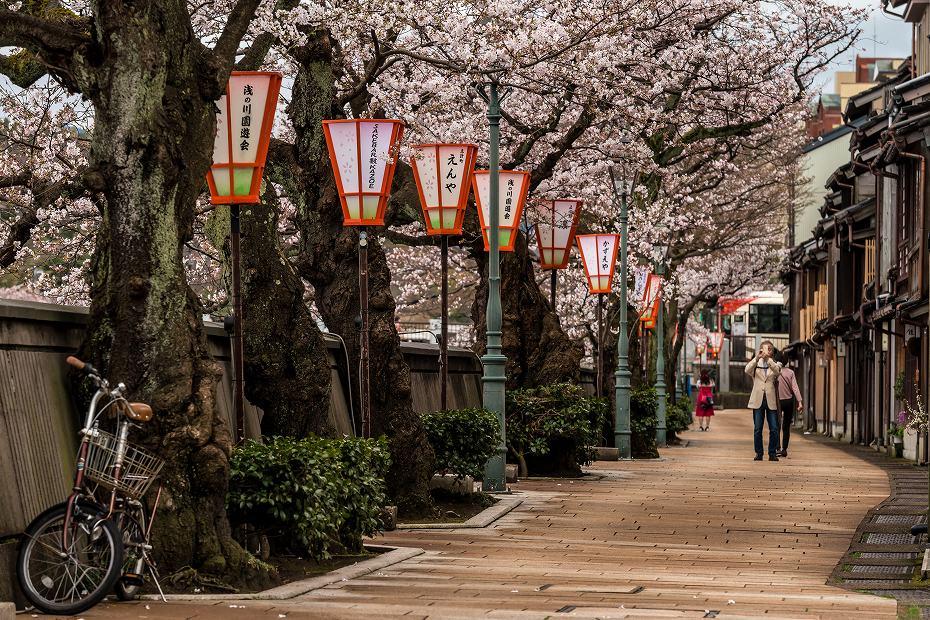 2017.04.07主計町の桜並木5