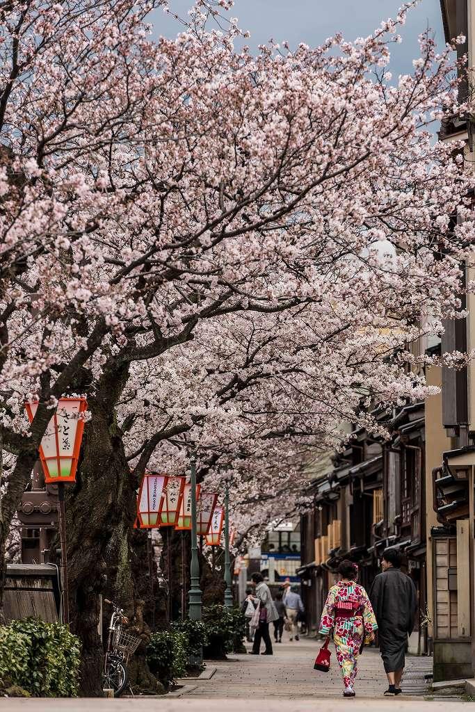 2017.04.07主計町の桜並木4
