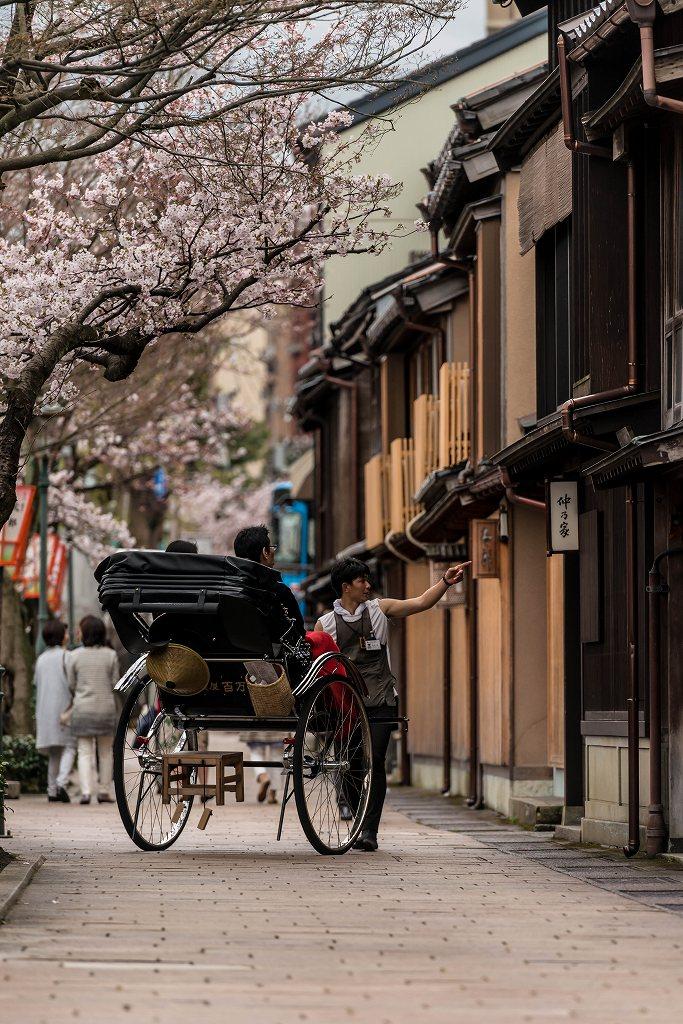 2017.04.07主計町の桜並木2