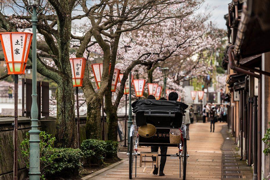 2017.04.07主計町の桜並木1