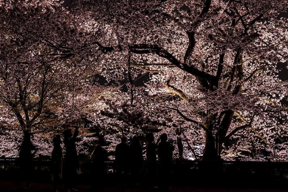 2017.04.08金沢城の桜16