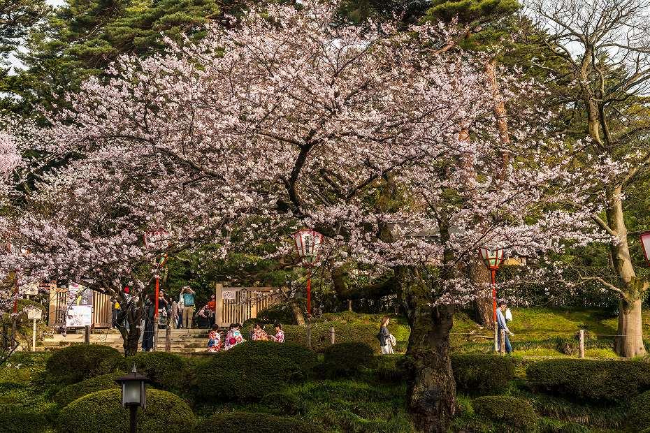 2017.04.08金沢城の桜12
