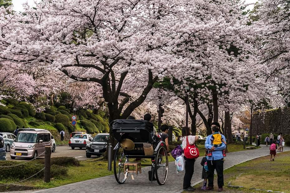 2017.04.08金沢城の桜11