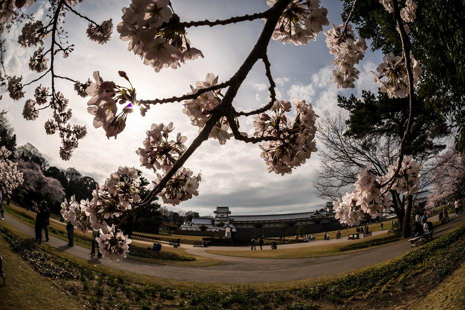 2017.04.08金沢城の桜9