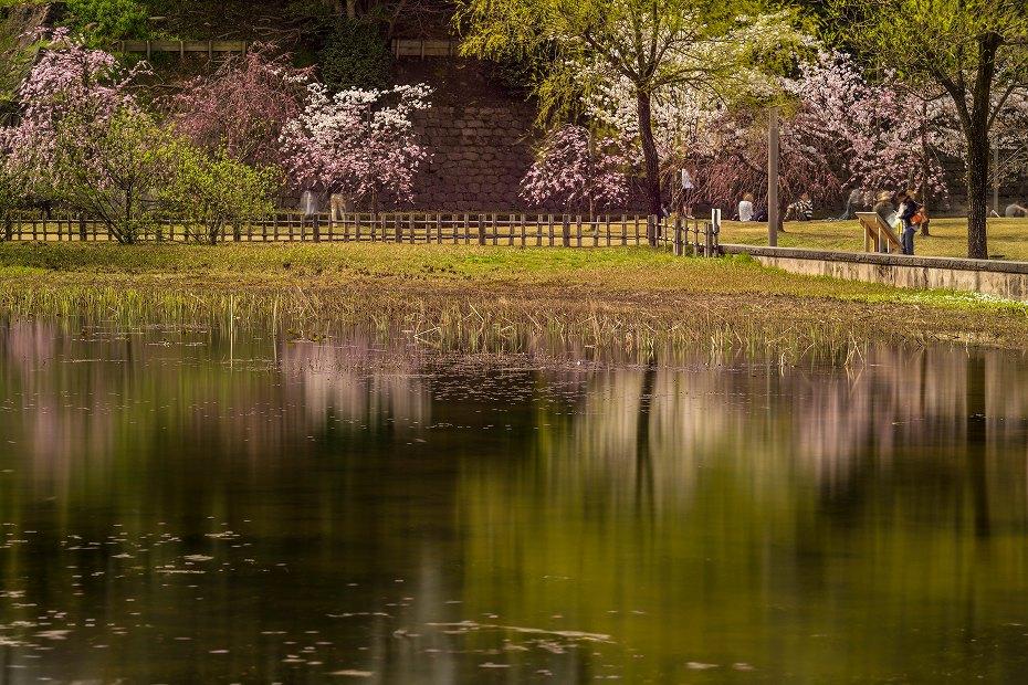 2017.04.08金沢城の桜7