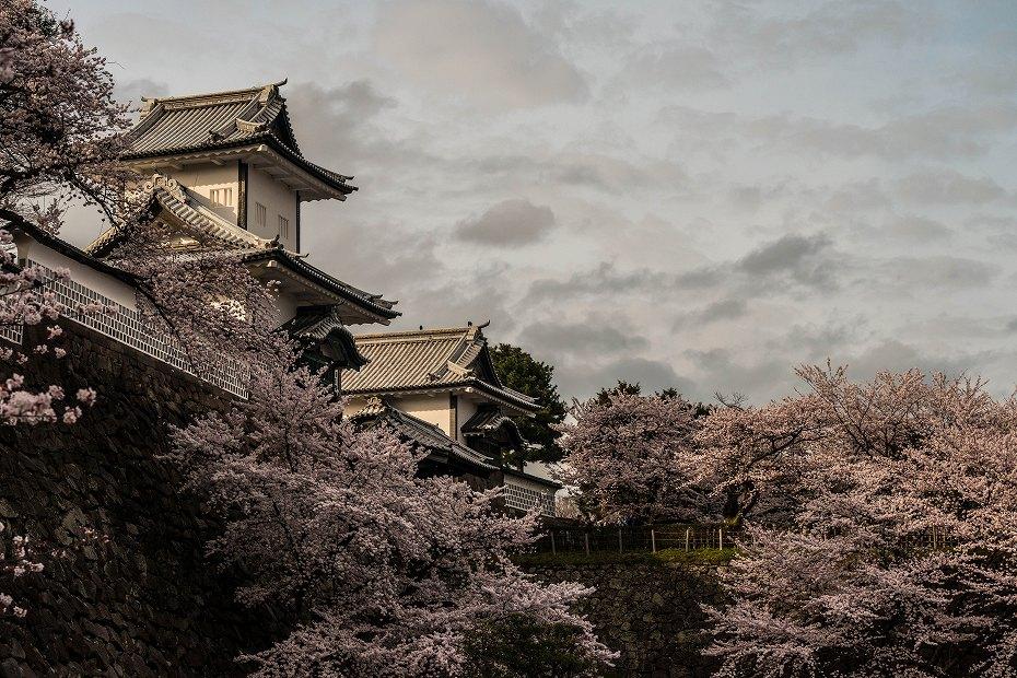 2017.04.08金沢城の桜5
