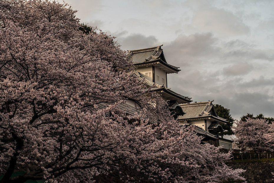 2017.04.08金沢城の桜4