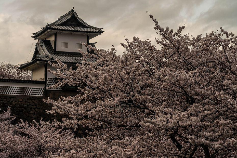 2017.04.08金沢城の桜3