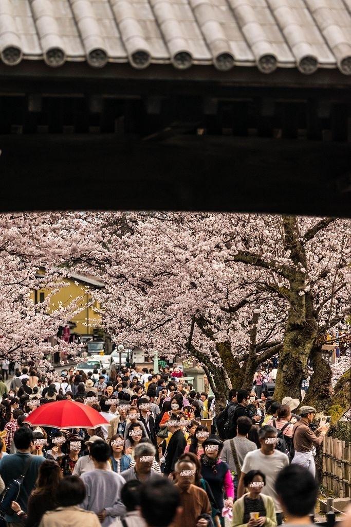 2017.04.08金沢城の桜2