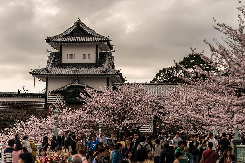 2017.04.08金沢城の桜1