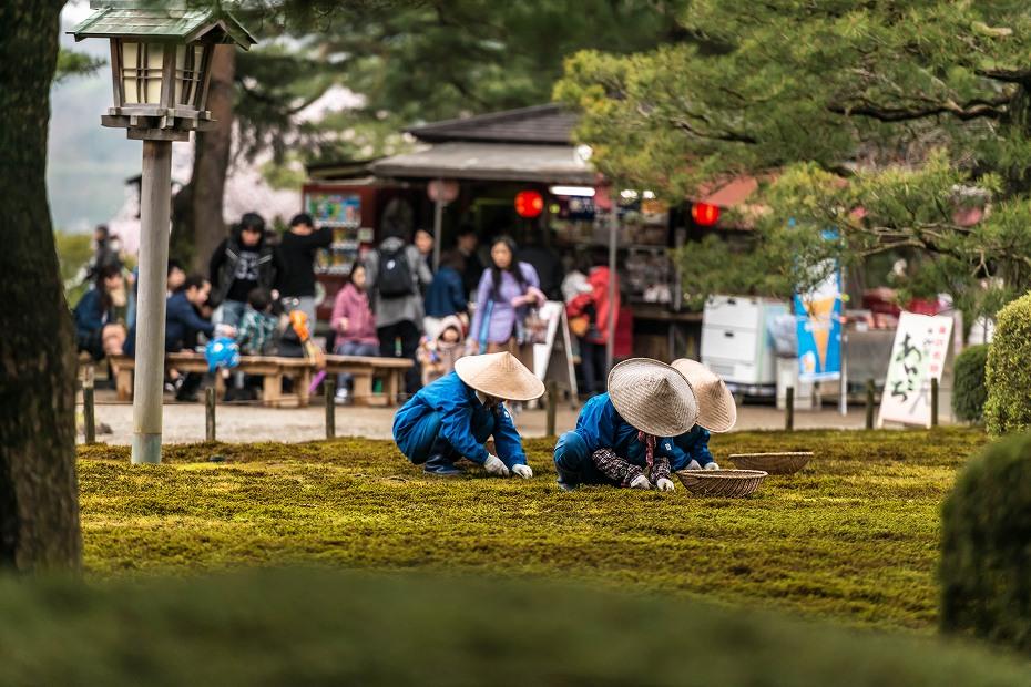2017.04.09兼六園の桜景色9