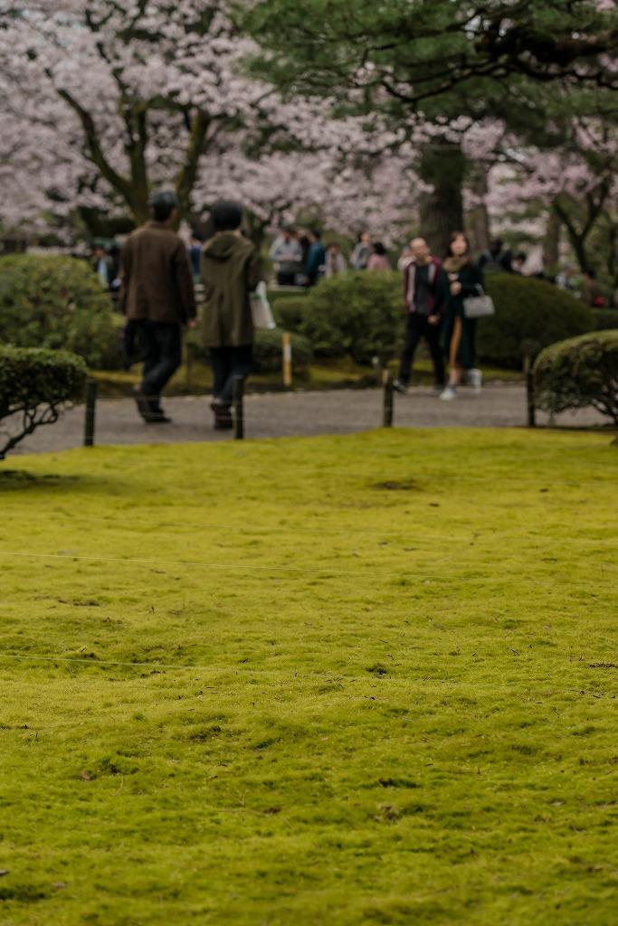 2017.04.09兼六園の桜景色8