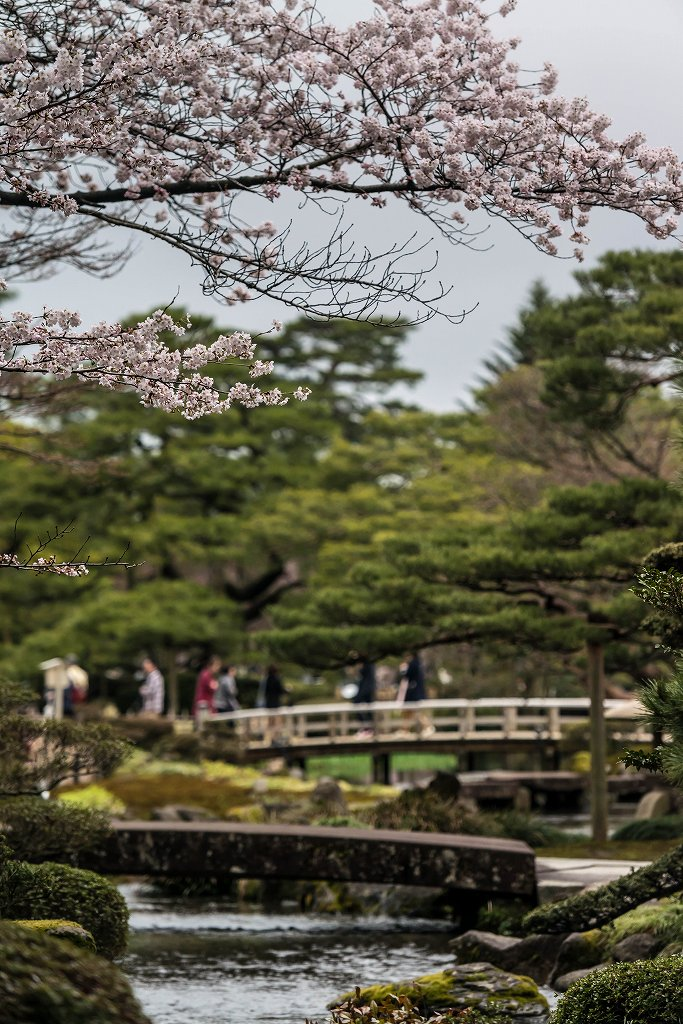 2017.04.09兼六園の桜景色6