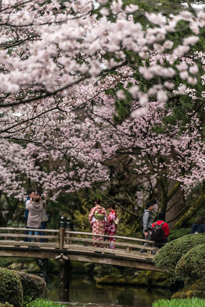2017.04.09兼六園の桜景色3