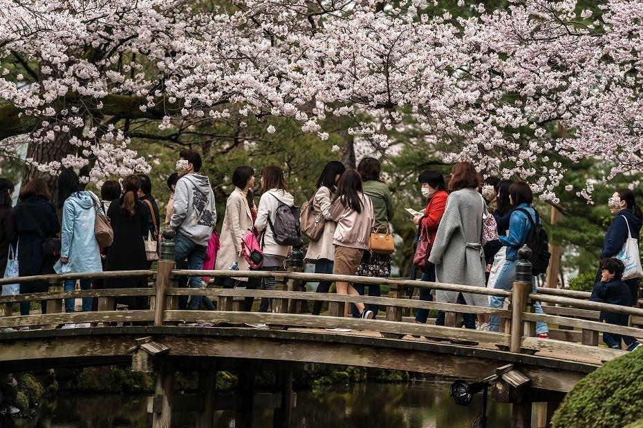 2017.04.09兼六園の桜景色2