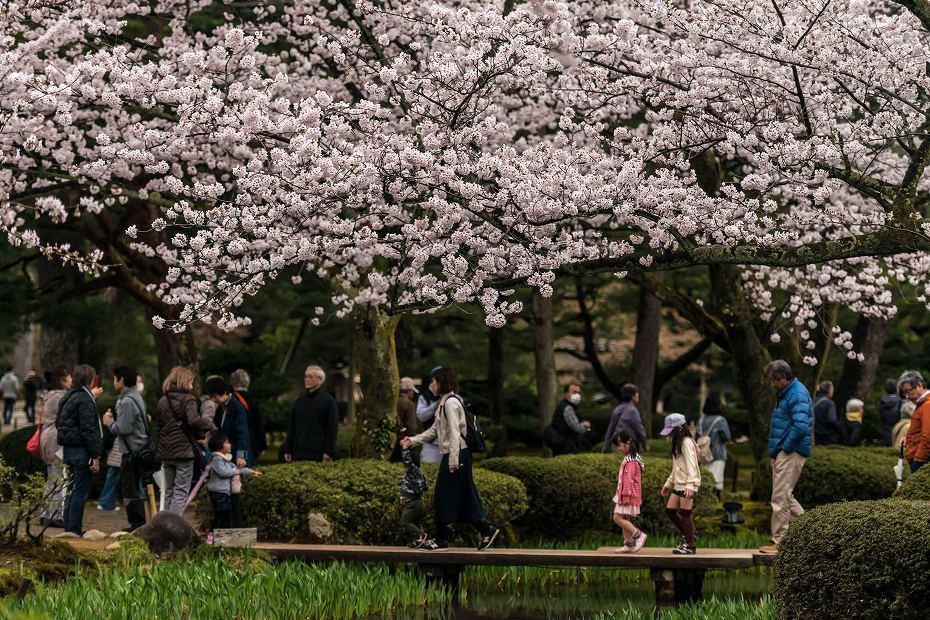 2017.04.09兼六園の桜景色1