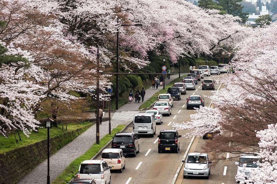 2017.04.09金沢城の桜景色5