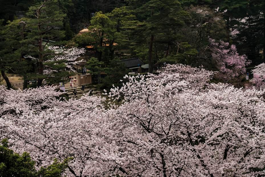 2017.04.09金沢城の桜景色6