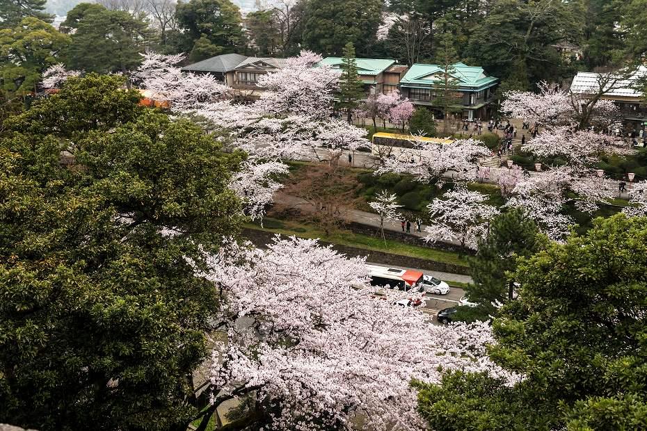 2017.04.09金沢城の桜景色3