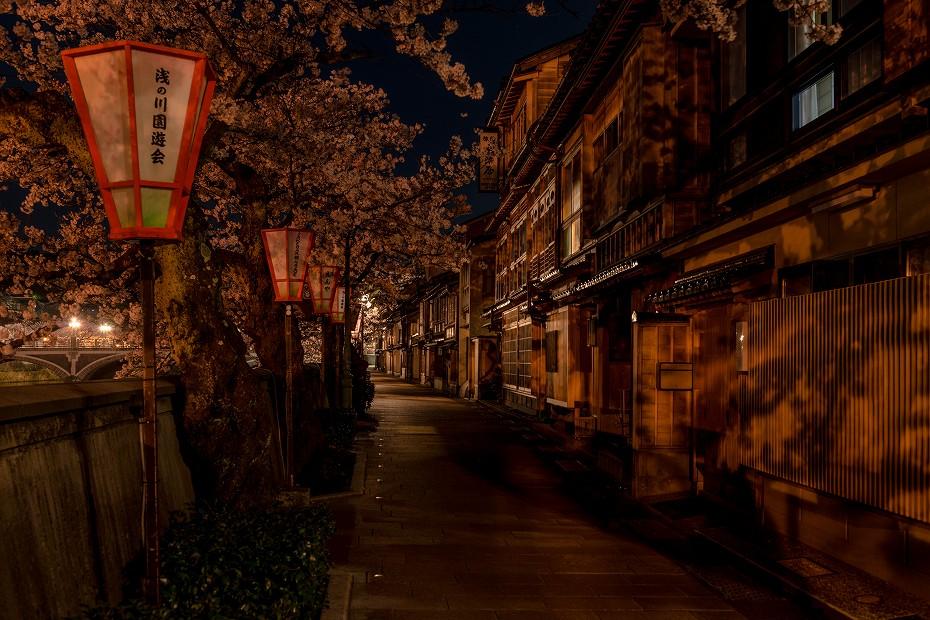 2017.04.10主計町の夜桜7