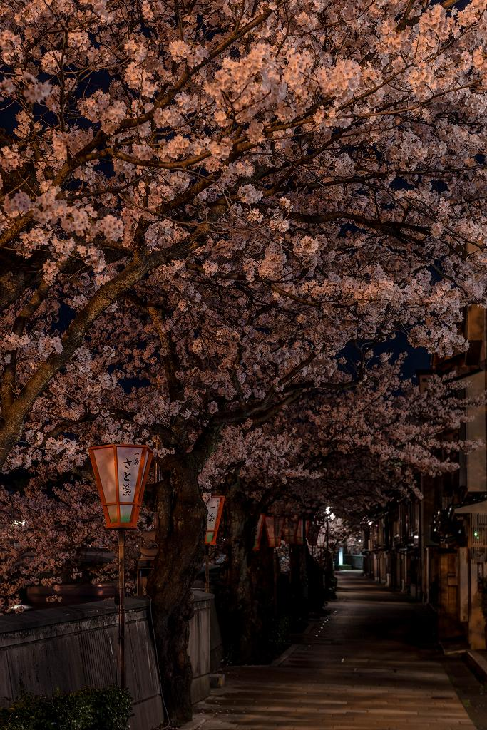 2017.04.10主計町の夜桜6
