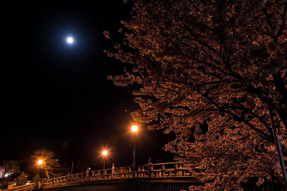 2017.04.10主計町の夜桜5