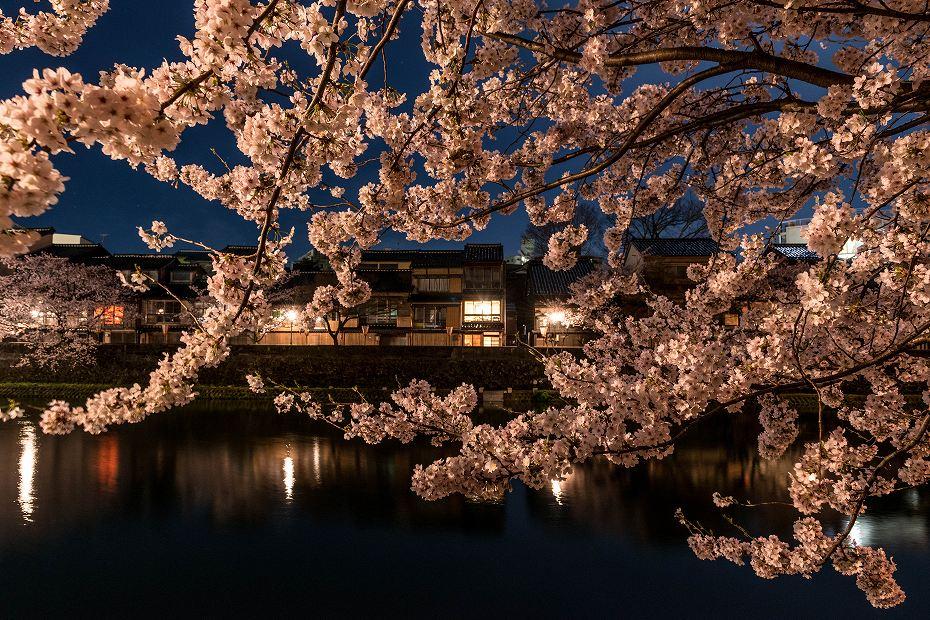 2017.04.10主計町の夜桜4