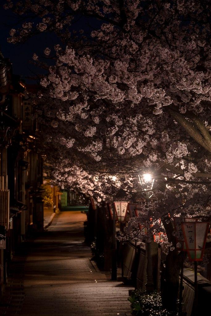 2017.04.10主計町の夜桜3