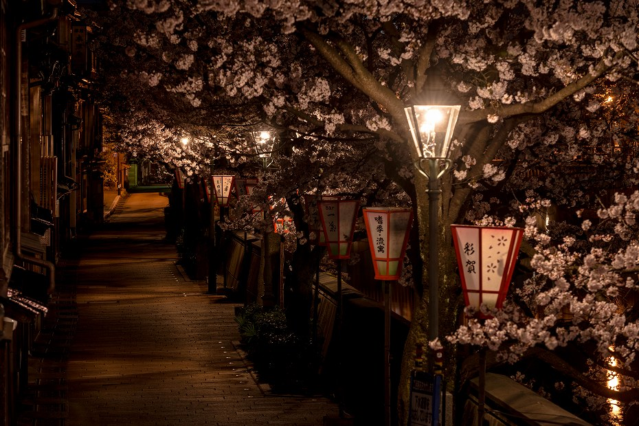 2017.04.10主計町の夜桜2